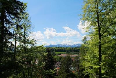 Waldausblick