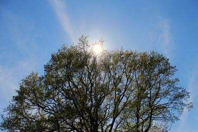 Baum im Gegenlicht 1