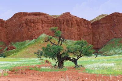 versteinerte Dünen in Namibia