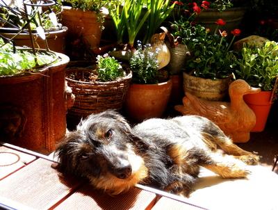 Relaxen in der Sonne