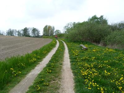 Radweg an der Müritz im Frühjahr