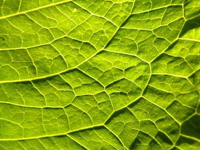 Blattgrün I