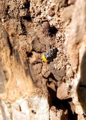 Unbekannte Larve im Baumbiotop