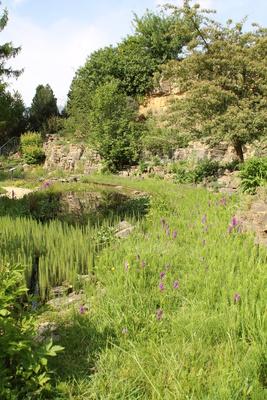 Ein Teich im Frühling