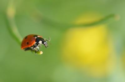 Flieg, Käfer flieg!
