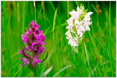 Zeit der Orchideen