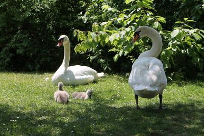 Frühlingsfamilie