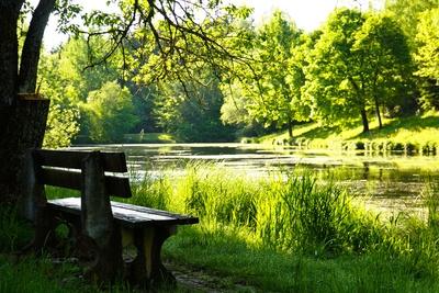 Waldsee mit Ruhebank