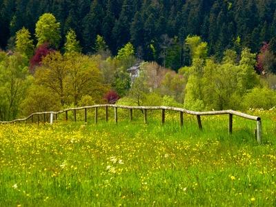 Bäume und Wiesen in Frühlingsfarben