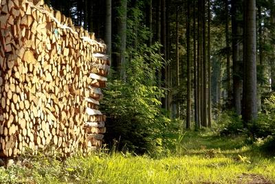 Holzlager im Wald