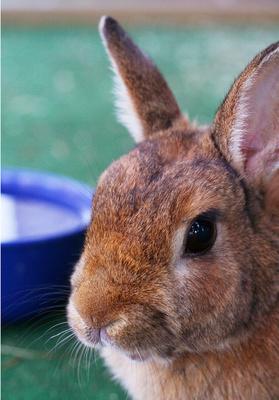 Kaninchen Nahaufnahme