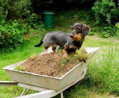 Hilfe bei der Gartenarbeit...