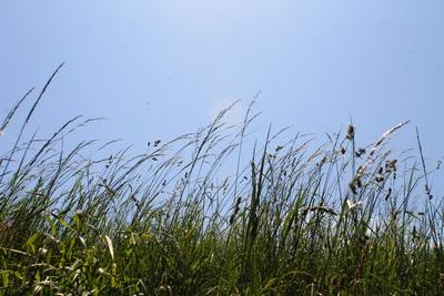 himmlische Gräser