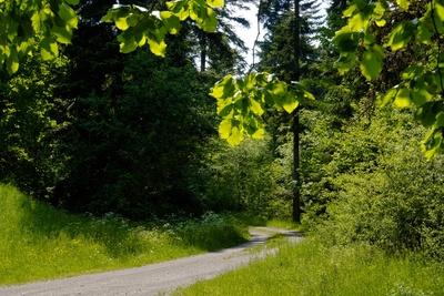 Sommerlicher Wald-Wanderweg
