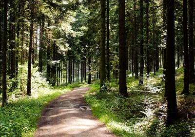 Schwarzwald-Wanderung