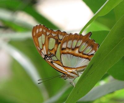 Schmetterling (8)