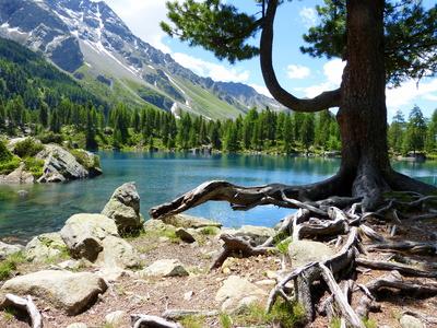 Paradies in den Schweizer Alpen