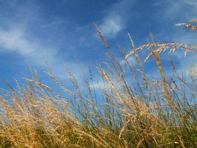 Hohes Gras-kl