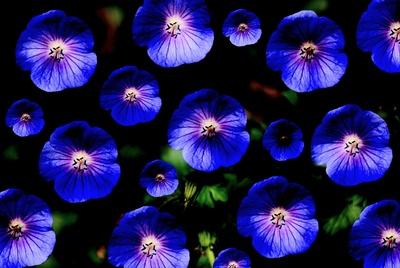 Blütenkunst Bild 5