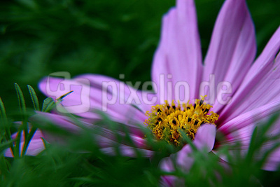 Blume-0016