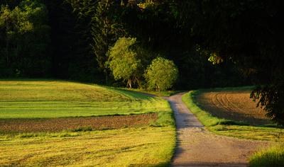 Feldweg im Morgenlicht