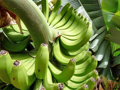 EU-Bananen