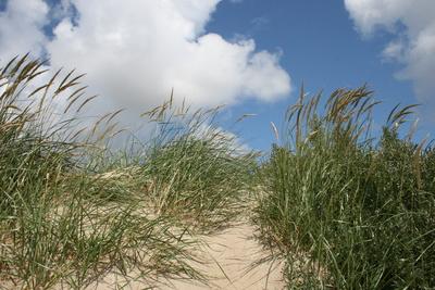 Strand von Langeoog Dünen 2