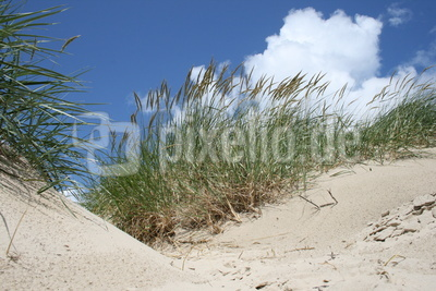 Strand von Langeoog Dünen 3