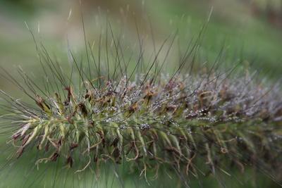 gräser_mit_tau1