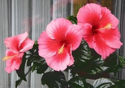 Blüten-Troika