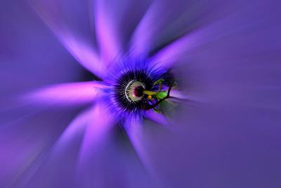 Blume-0034