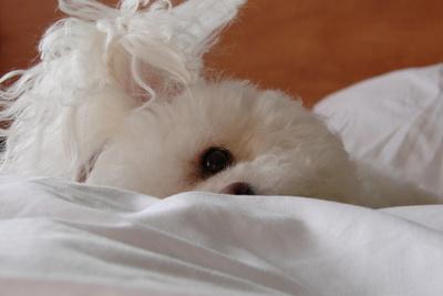 Schlafmütze