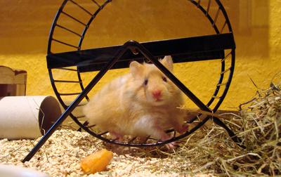 Hamsterwohnung