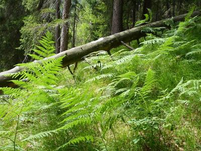 Naturwald