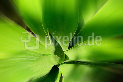 Blume-0045