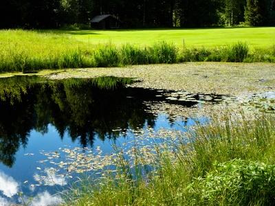 Biotop mit Teich und Hütte