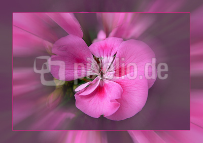 Blume-0058