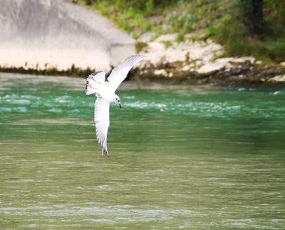 Sommerflug über die Isar