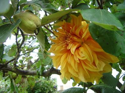 Besuch im Quittenbaum-
