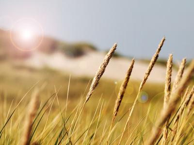 Sonne im Dünengras