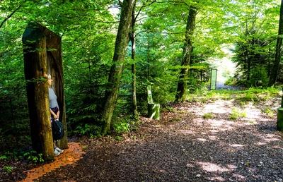 Wellness-Wald - im Schutz des Baumes