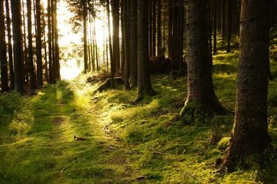 Waldwanderweg mit Morgensonne 2