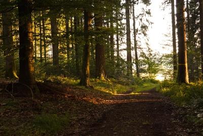 Waldwanderweg mit Morgensonne 1