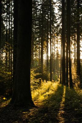Waldwanderweg mit Morgensonne 3