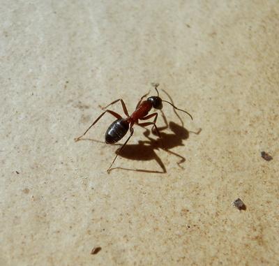 Auch Ameisen werfen Schatten...