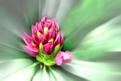 Blume-0079