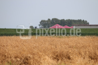 Bioenergie1_FGerlach
