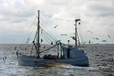 Krabbenkutter auf der Nordsee