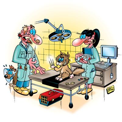 Berufsbilder: Tierarzt
