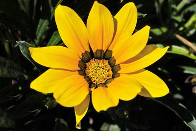 Blume-0088